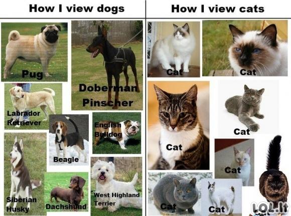 Šunys ir katės