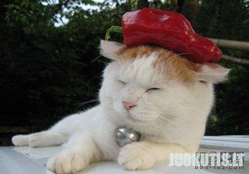 Laimyngos katės