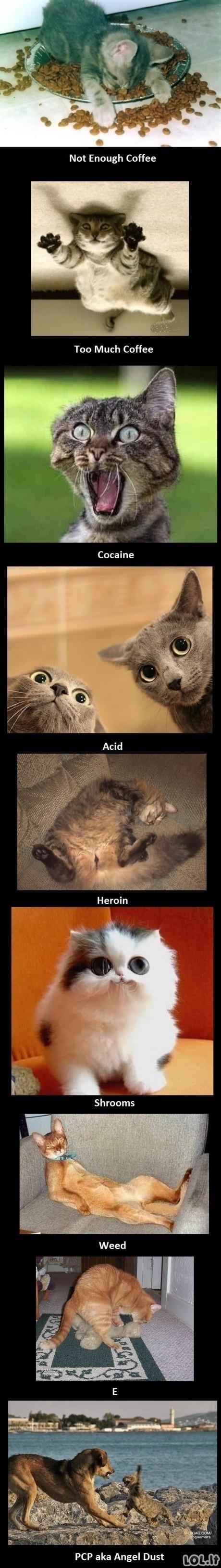 Narkokatės
