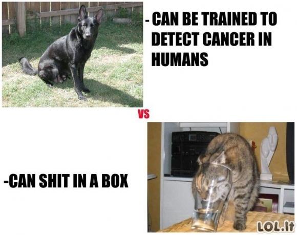Šunys VS Katės