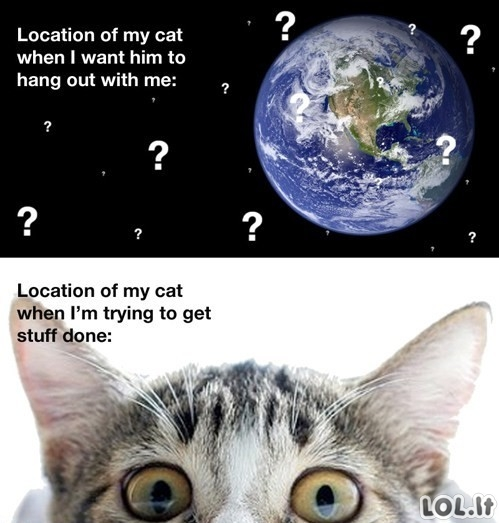 Katės vieta