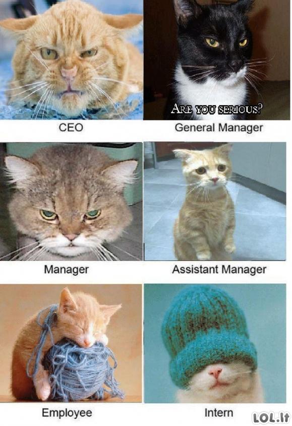 Kačių ofisas