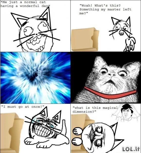 Normali katė