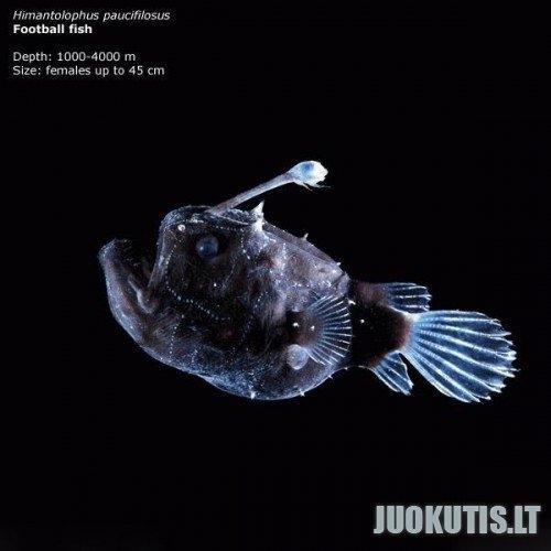 Giliausiai gyvenančios žuvys