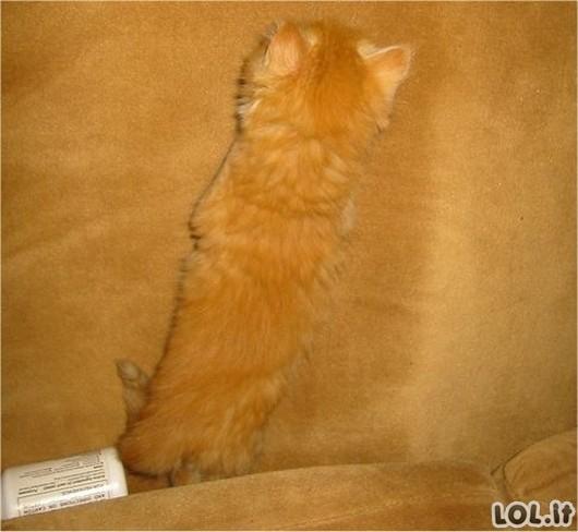 Kamufliažinių kačių top-10