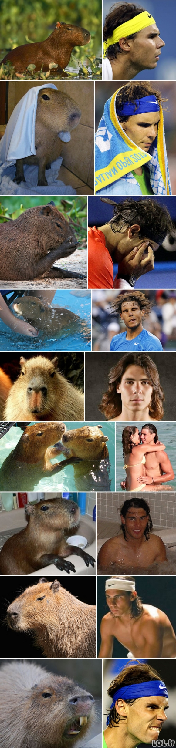 Kapibara prieš Nadalį