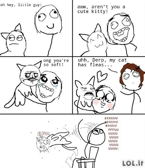 Labai mielas katinas