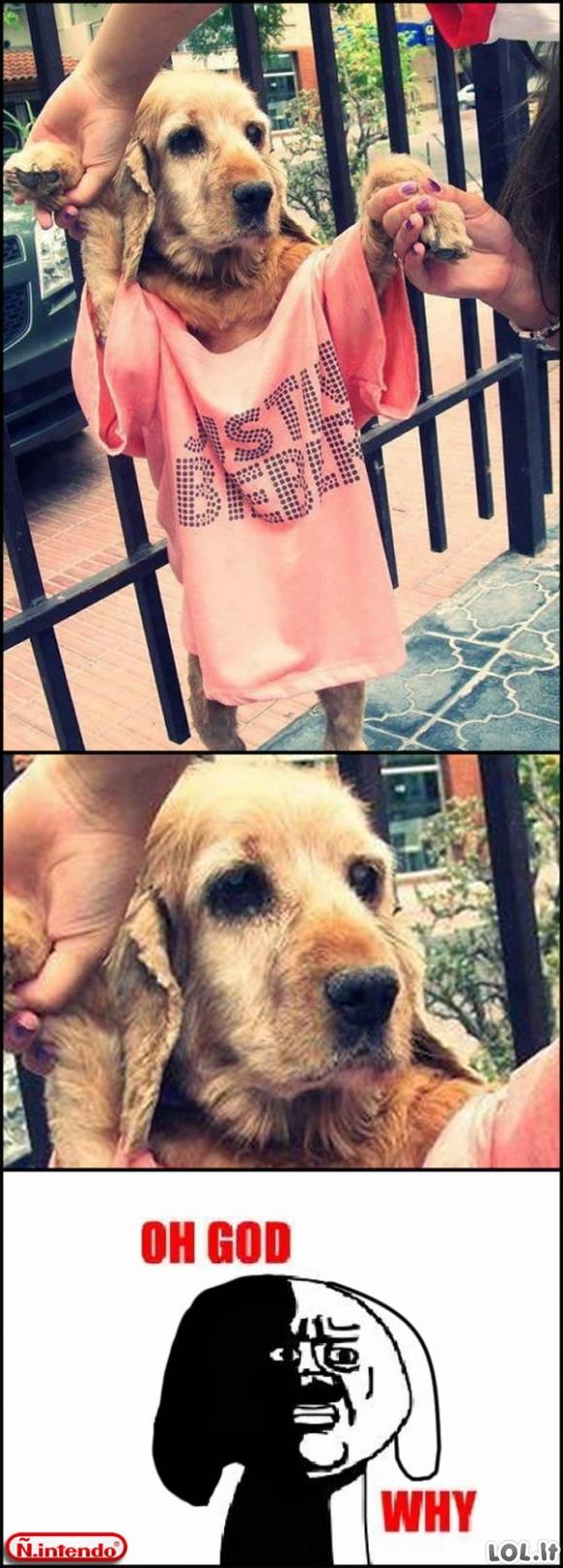 Vargšas šuo