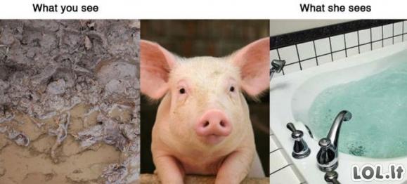 Ką mato gyvūnai