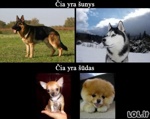 Kaip iš tiesų atrodo šunys?