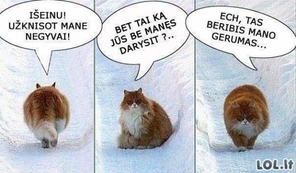 Beribis katino gerumas