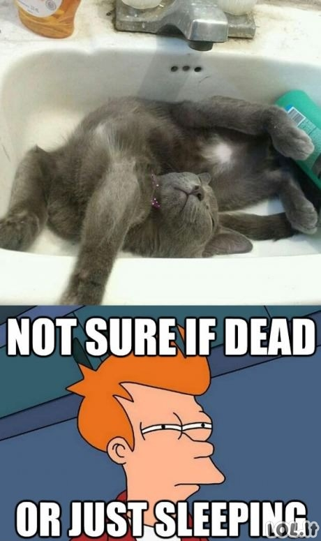 Katino miegas