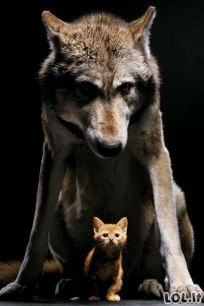 Su meile, gyvūnai