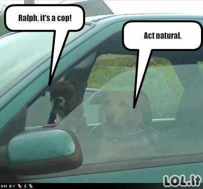 Prieš policijos pareigūnus....