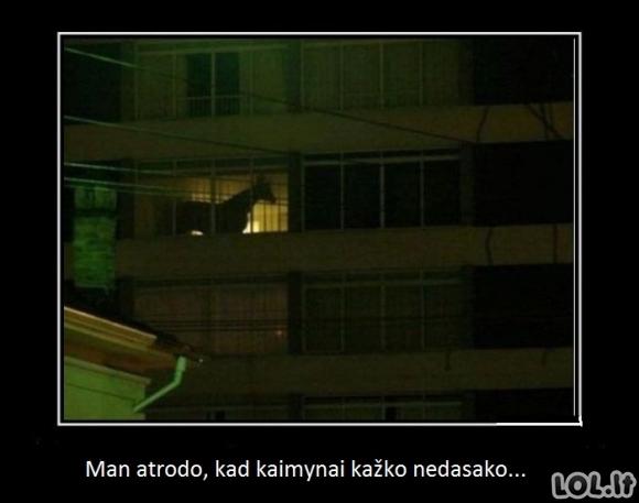 Kaimynų didžioji paslaptis
