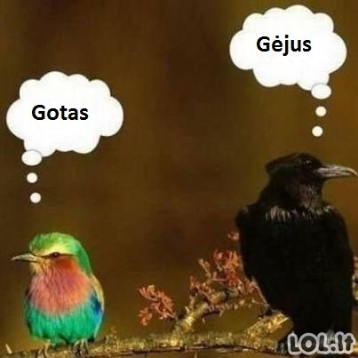 Paukščiai neformalai