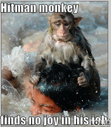 Beždžionėlė žudikė