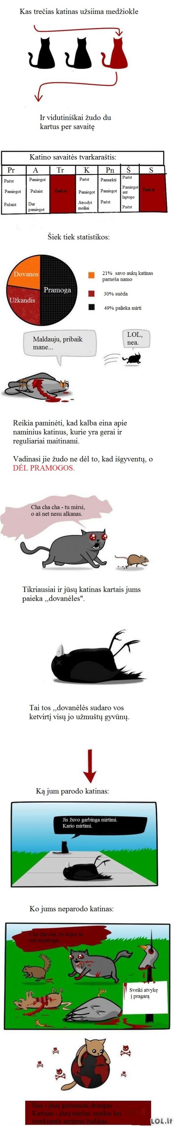 Kraupi tiesa apie katinus