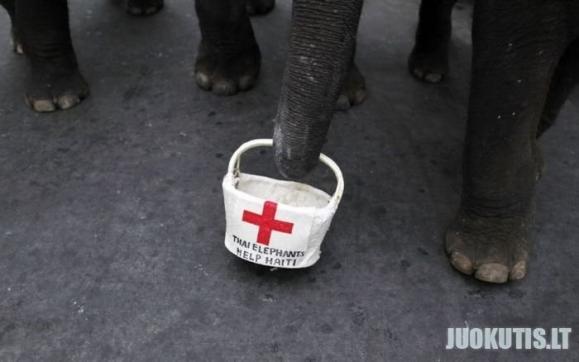 Tailando salos drambliai