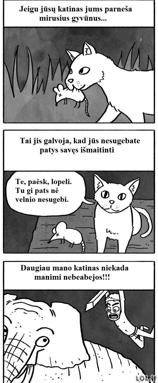 Katės dovanos