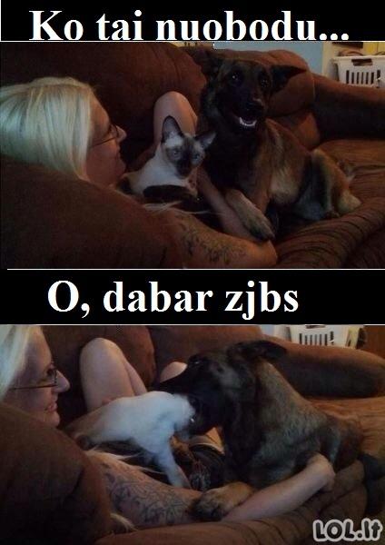 Kai šunims būna nuobodu