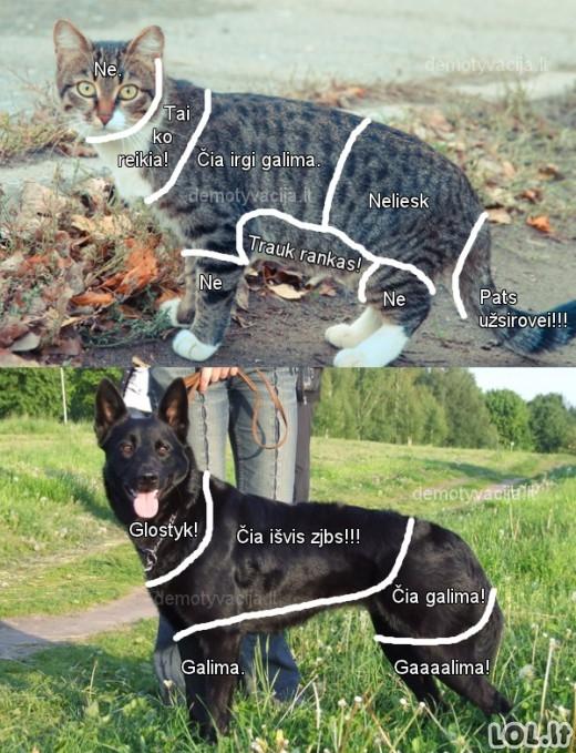 Dėl ko šuo geriau už katiną