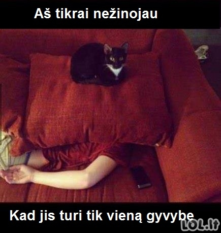 Neišmanus katinas