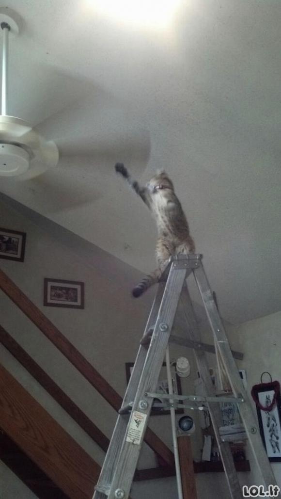 Antradienio žemai puolusios katės