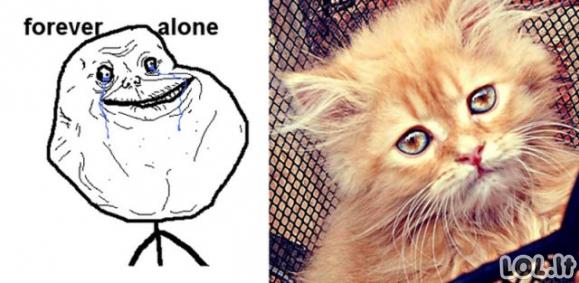 Ketvirtadienio katiniški memai