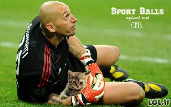 Penktadienio sporto katės