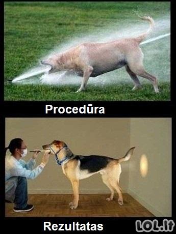 Šuniškos procedūros