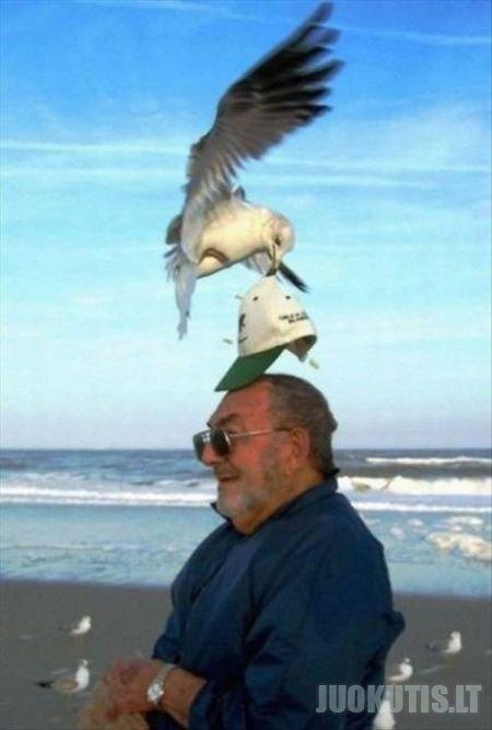 Ah tie paukšteliai