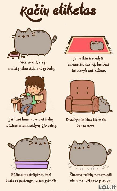 Kačių etiketo pradmenys