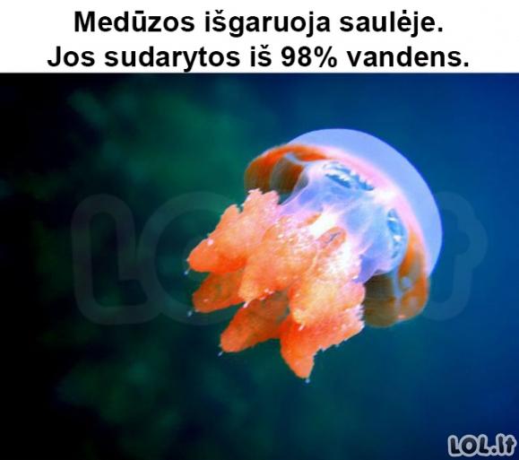 Tikri faktai apie medūzas, vyrus, bananus ir kt.