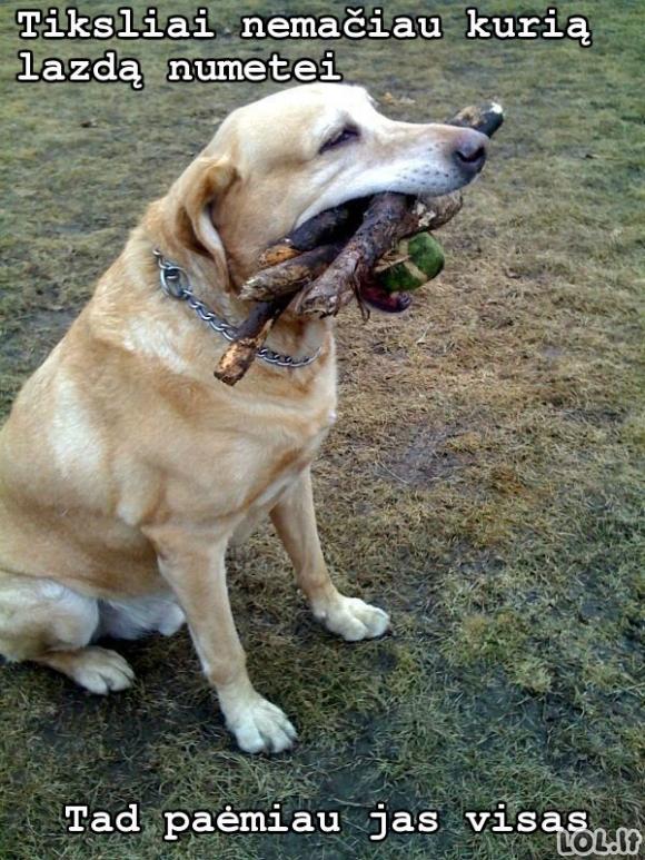 Šunėkas prie bajerio