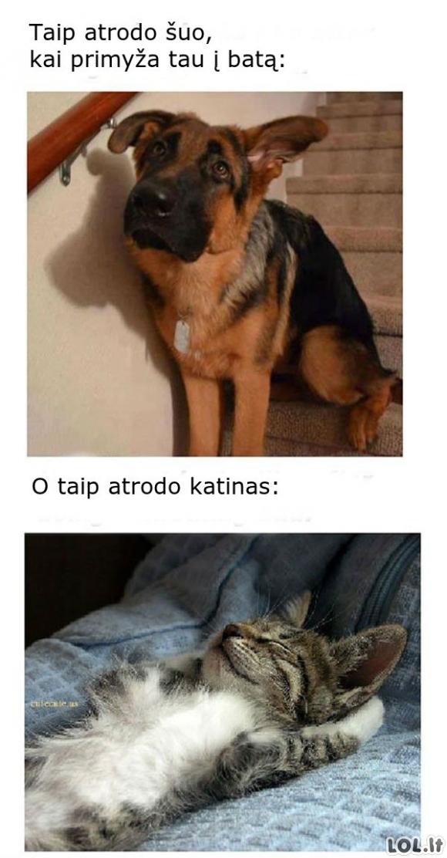 Kai katinas ir šuo primyža į batą
