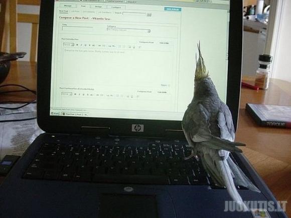 Online animals