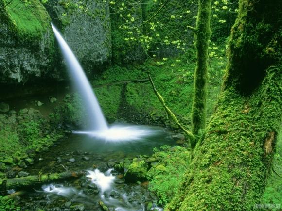 Tiesiog Gamta