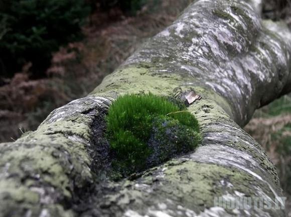Gražiausi medžiai