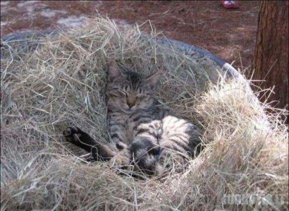Kačių ferma