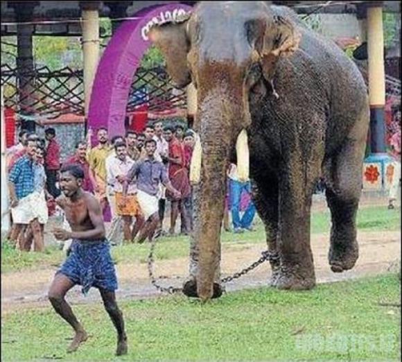 Užpyko drambliukas