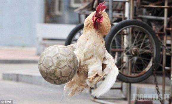 Pasaulio futblo čempionatas