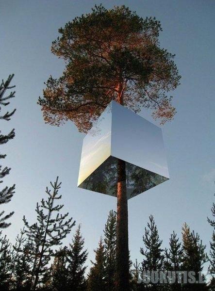 Viešbutis ant medžių