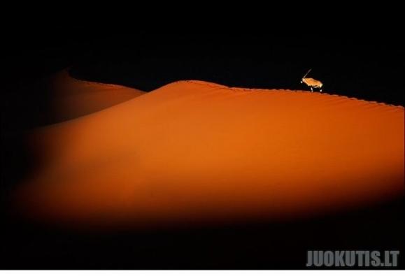 """Tarptautinio fotografijos konkurso nugalėtojas \""""Laukinės gamtos išsaugojimas\"""""""