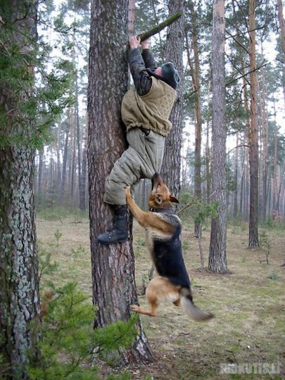 Laukiniai gyvūnai puola !