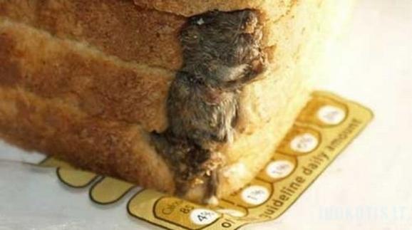 Duonoje nudvėsusi pelė