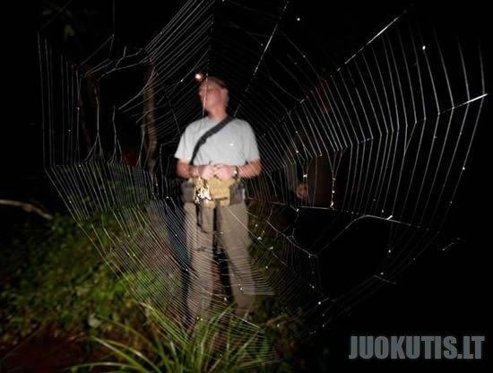 Didžiausias voratinlis pasaulyje
