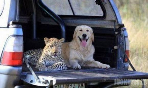 Dar viena eilinė gyvūnų draugystė