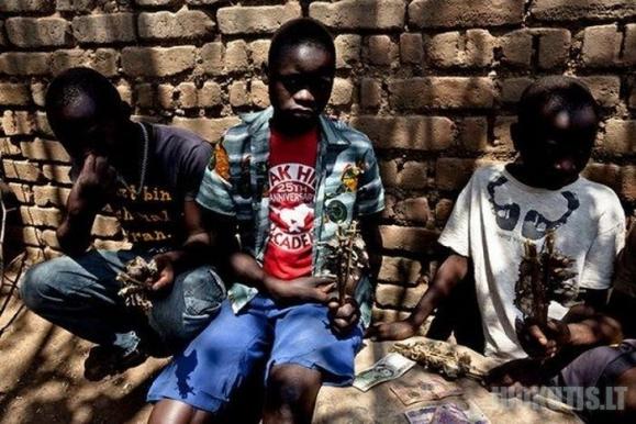 Žiūrkių gaudytojai iš Mozambiko