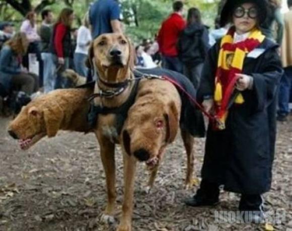 Gyvūnėliai iš Hario Poterio pasaulio